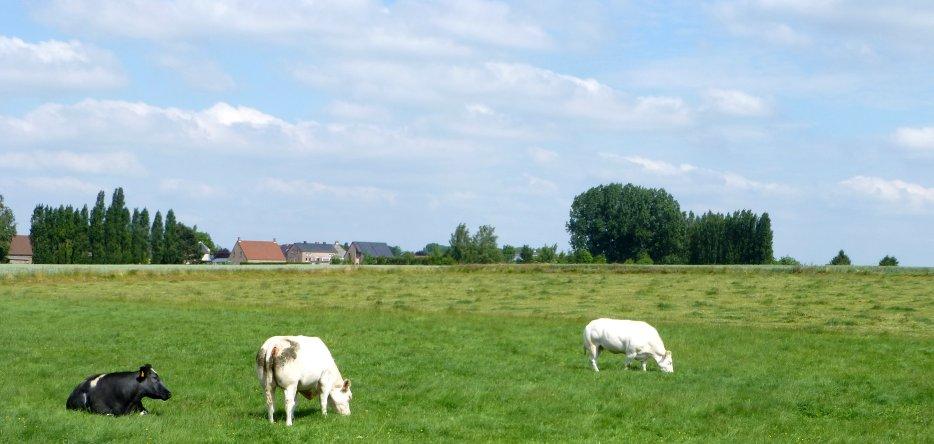 Le hameau de La Haye et le champ de bataille depuis Le Hameau de Saint-Amand
