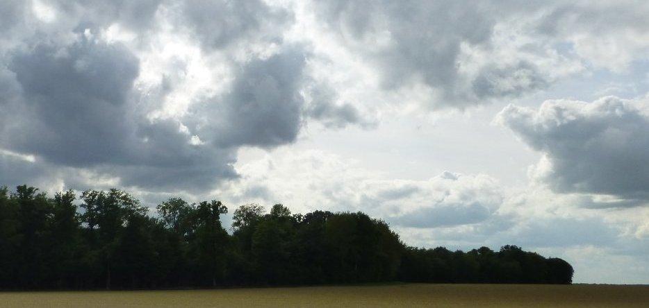 Le bois de Beaumont à Vauchamps